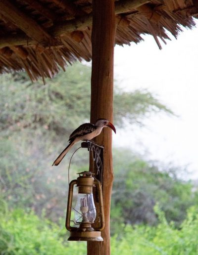 Julie_Gallagher_Kenya_Samburu-34